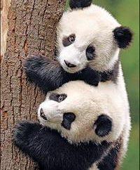 gli animali in via di estinzione. Posso tenerli?