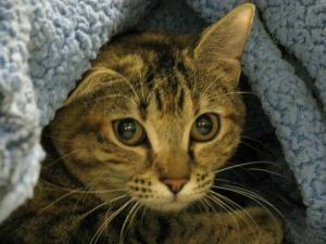 Nosówki u kotów: objawy, leczenie, oraz inne informacje
