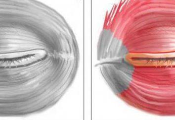 Funzione del muscolo circolare dell'occhio e del muscolo circolare della bocca