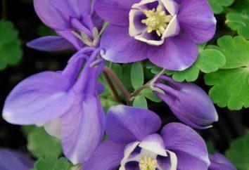 Imparare i nomi di bellissimi fiori – sono non meno bella e misteriosa …