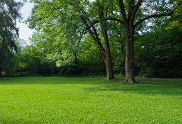 hierbas del césped de bajo crecimiento. Semillas de hierbas de césped, el precio. Hierba del césped, que mata las malas hierbas