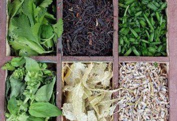 Quali erbe sono sicuri da ridurre l'appetito per il corpo