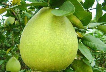 nutritionniste d'information combien de calories sont dans un pomelo, ainsi que les avantages et les inconvénients de ce fruit