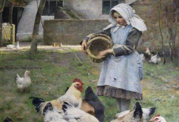Comment nourrir les poules pondeuses à la maison et dans les fermes avicoles?