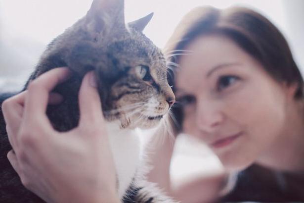 Schlaganfall Bei Katzen