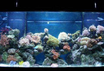 Alle Gründe, warum von den Aquarienwänden erscheinen grün