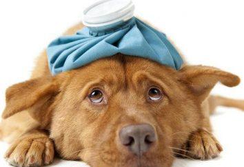 ¿Dónde están la clínica veterinaria en Tyumen?
