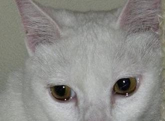 Y gatos lloran?
