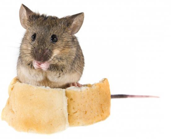 comment se dbarrasser de souris dans la maison beautiful un toit rempli de chauves souris sms. Black Bedroom Furniture Sets. Home Design Ideas