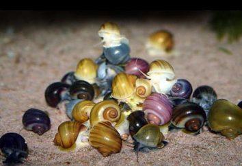 Aquatic ślimaki ampulyarii: Konserwacja i pielęgnacja, hodowla