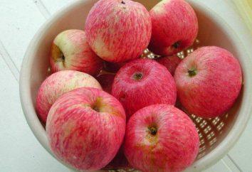 Borovinka – albero di mele con frutti autunnali