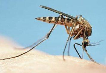 Swędzenie zwalniającej od ukąszenia komara u dorosłych i dzieci? dobra rada