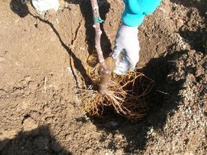 Wir verwenden fungizide Wirkstoffe für den Pflanzenschutz von Krankheiten