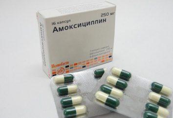 """El medicamento """"amoxicilina"""": instrucciones para el uso de píldoras, o ¿Cómo vencer la infección"""