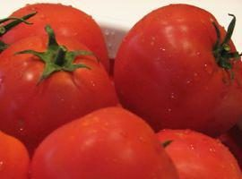 """Pomodoro """"Sanka"""": recensioni, caratterizzazione e suggerimenti"""