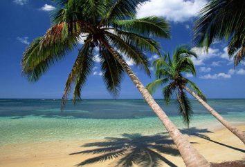 Gdzie rosną kokosy? Siedlisko z palmy kokosowej
