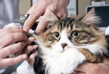 Jak gwoździe cięte koty prawda?