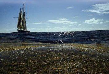 O Mar dos Sargaços, uma armadilha para a caravela