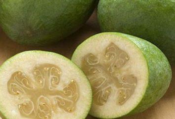 Exotische feijoa: Kalorien- und vorteilhafte Eigenschaften der Besucher aus dem Ausland