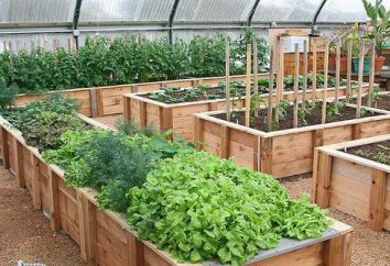 Domowy ogród warzywny i ogród: Ciekawe pomysły