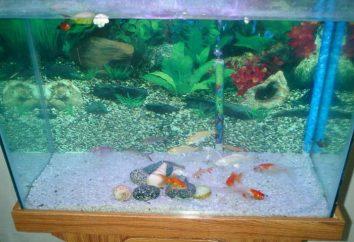 Le bleu de méthylène pour aquarium: La composition et les moyens d'application