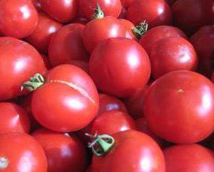 """Tomate """"Lazy"""": Descrição da variedade, características, cultivo, revisões"""