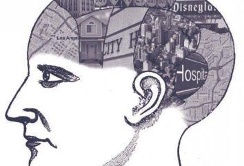 Poznawcza map: pojęcie, badania, zwłaszcza