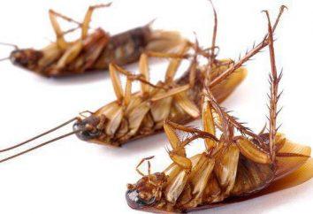 """El gel de cucarachas """"global"""": el principio de acción y comentarios"""
