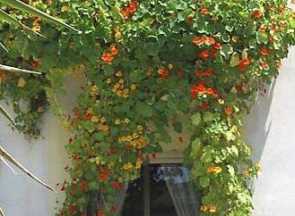 Des fleurs sur les balcons: les professionnels Conseils
