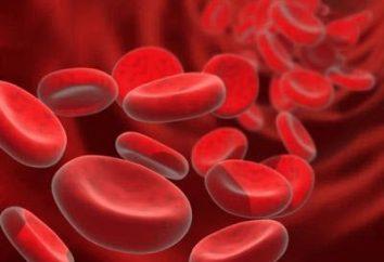 Proteine biosintesi: una chiara e concisa. biosintesi delle proteine nelle cellule viventi