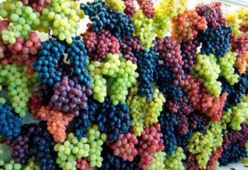 Przydatne niż winogrona dla organizmu? Winogrona: korzyści i szkody
