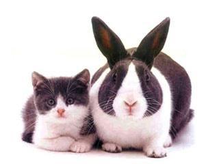Mogę dać pokrzywy króliki? Jaki rodzaj trawy można podawać królikom?