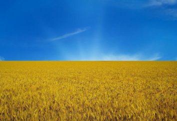 Drapeau jaune-bleu de l'Ukraine, son histoire et le destin