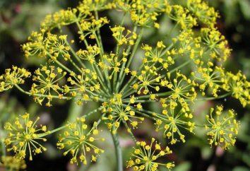 Inflorescencias: tipos de inflorescencias de las plantas