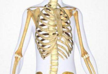 Osteon – jednostkę konstrukcyjny kości Struktura i funkcja