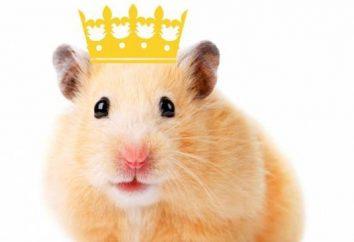 Real Hamster – lo que es esta raza?