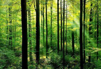 Che cresce nella foresta e che vive? Descrizione di primavera e in autunno foresta