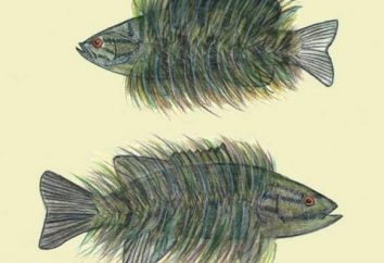 """""""W futrze ryb"""": phraseologism wartość i historię jej występowania"""