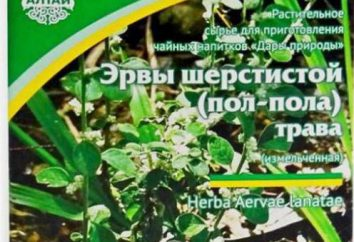 Trawa Erwa wełnisty: wykorzystanie i przeciwwskazania