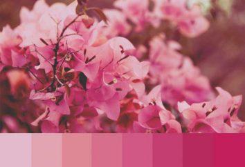 Połączenie różowego koloru z innymi kolorami: odzież, wnętrza