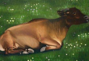 Interpretazione dei sogni: Cow – L'interpretazione dei sogni