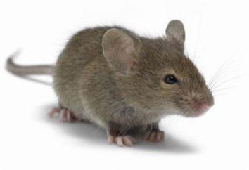 ¿Qué animales viven en madrigueras? La respuesta – en nuestro artículo!