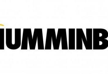 "Sounder ""Hamminberd"": types, prix, avis"