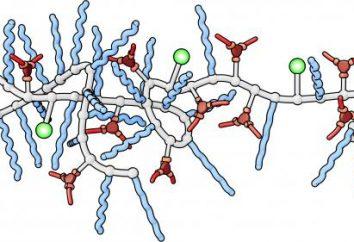 Come catalizzatori biologici sono chiamati? Gli enzimi come catalizzatori biologici