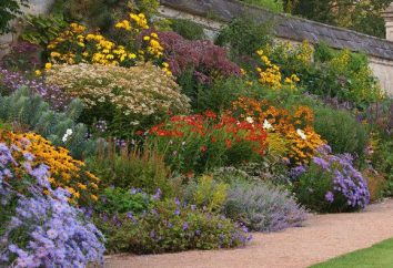 Anspruchslos mehrjährige Blumen für den Garten (Foto)