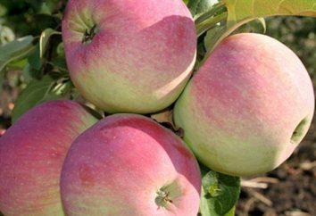 Świeże (jabłko): opis i opinie