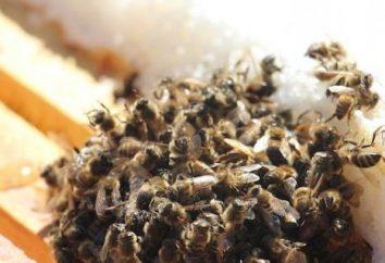 Hivernage abeilles dans omshanike. Apiculture pour les débutants