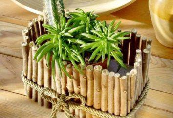 Pots de fleurs avec leurs mains – spiritualiser notre maison et jardin