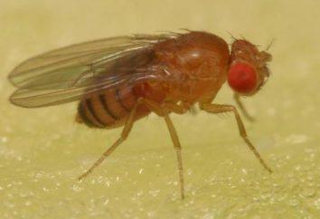 Havia mosquitos no apartamento? Livrar-se da invasão