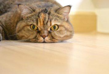 Las gotas más eficaces para gatos en celo: revisiones